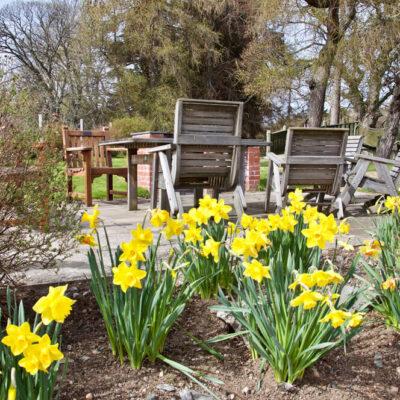 Daffodils & Patio