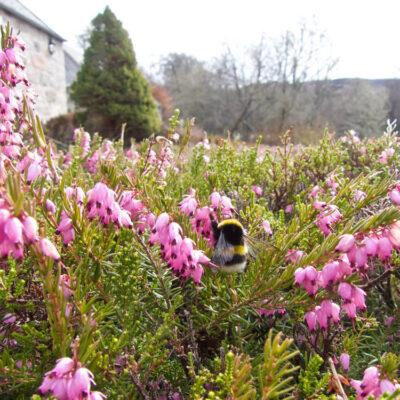 Summer - Bees