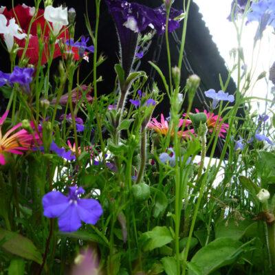 Summer - Flowers